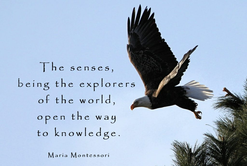 The Essence of Learning by Maria Montessori
